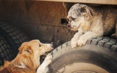 Pas ekstra godt på dine kæledyr